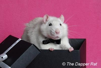 The Dapper Rat Calendar 2012 Shoots 4