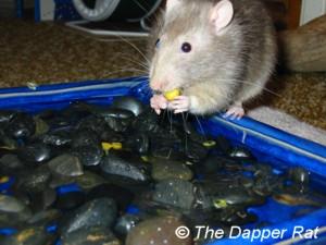 Rat Toy Ideas